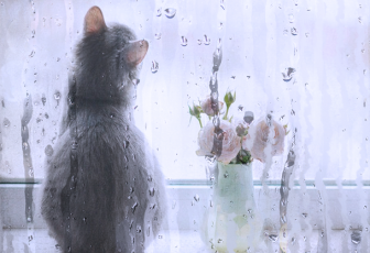 制作雨天水雾玻璃流动水珠图片的PS教程